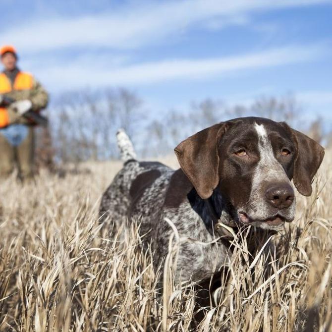Las particularidades de la caza