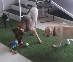 Guardería, educación y psicología canina