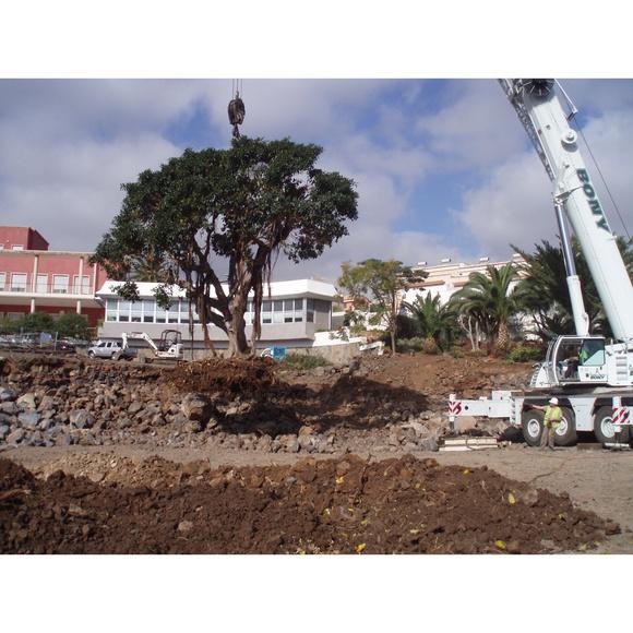 Trasplantes especiales: Productos y Servicios de Islas Jardín, S.L.