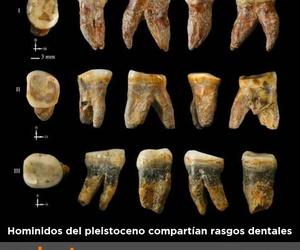 Homínidos con rasgos dentales comunes.