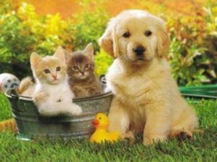 ALERGIA A LOS ANIMALES : Tratamientos de Alergia y Asma Casa de Salud. Dra Valentina Gutiérrez