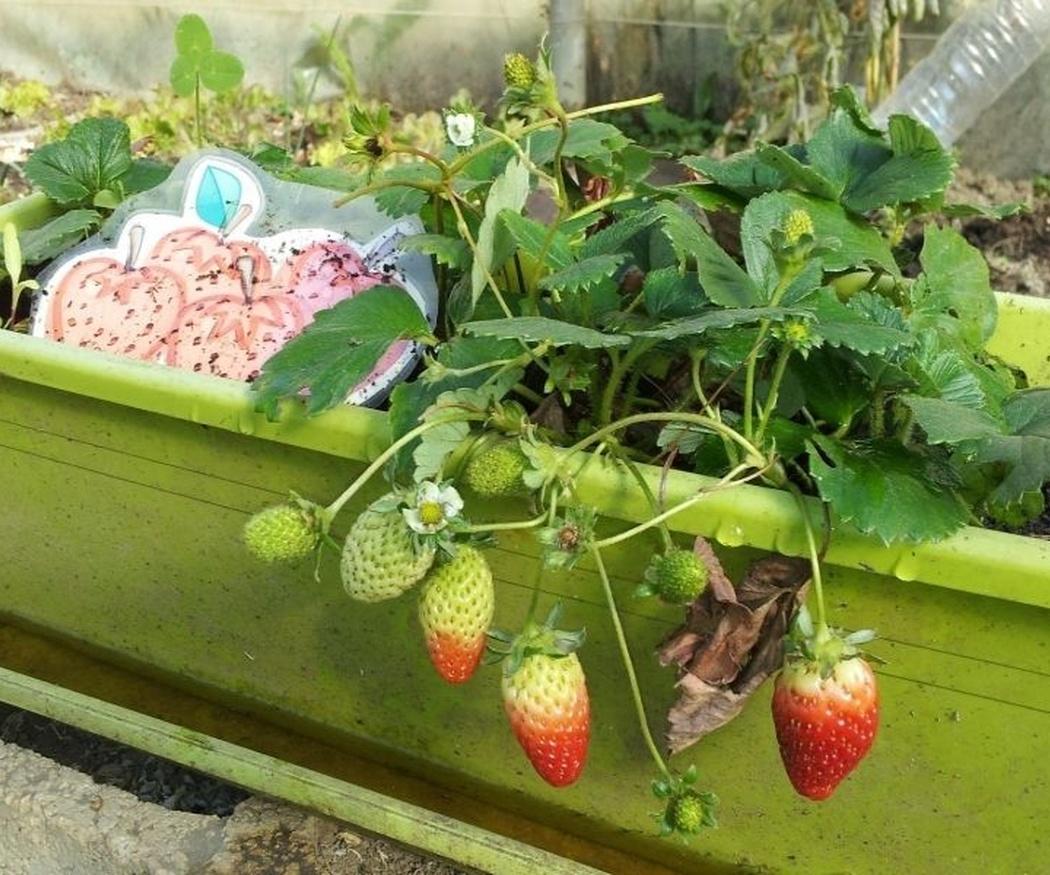 Consejos para montar tu propio huerto en tu terraza