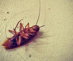 El calor ayuda a las plagas de cucarachas