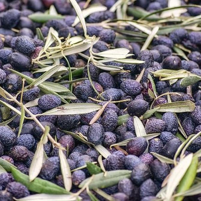 Antecedentes y surgimiento del actual aceite de oliva
