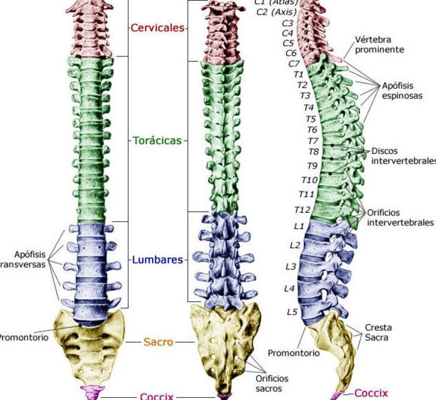 Inflamación intestinal y lesión vertebral