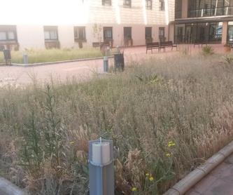 CONSERVACIONES DE JARDINES Y COMUNIDADES : Servicios de Jardines y paisajes