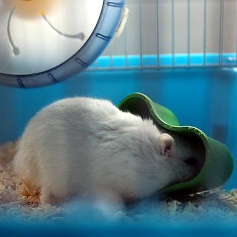 Para roedores: Productos de Mascotas Madrid