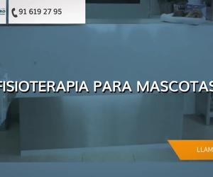 Clínica veterinaria en Alcorcón: Centauro Veterinarios