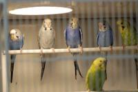 Pájaros: Catálogo de Interzoo Guadalajara