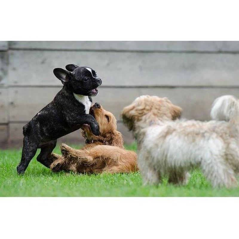 Animales: Áreas de servicio de Osset Estudio Jurídico
