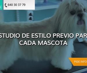 Peluquería canina en Leganés | Narval Mascotas