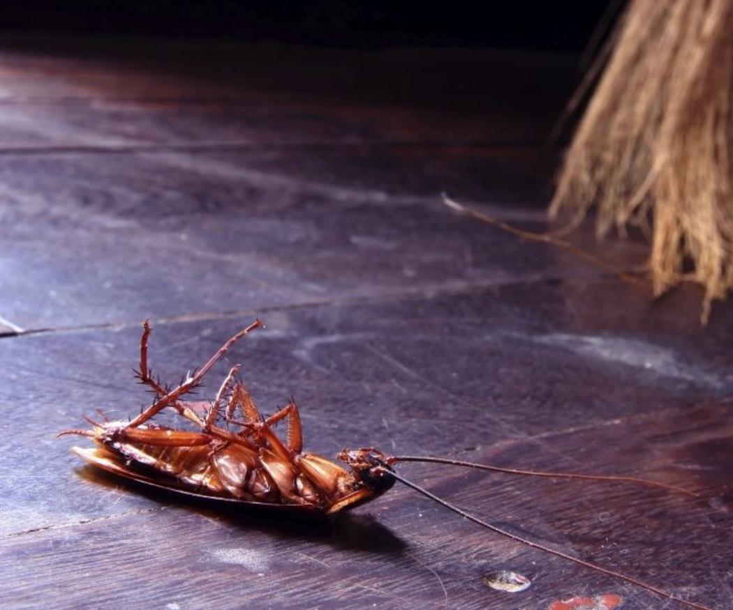 Evitar las cucarachas en verano