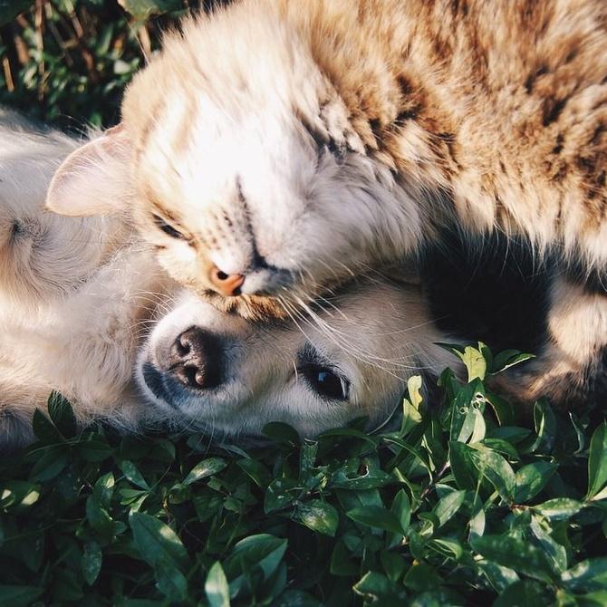 ¿Perros o gatos?