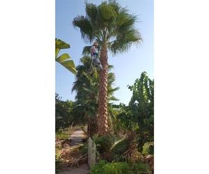 Venta de palmeras en Granada