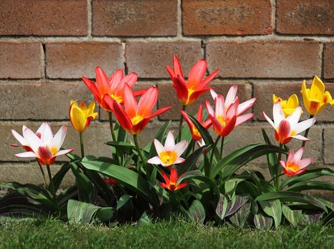 Un jardín cuidado te hace más feliz