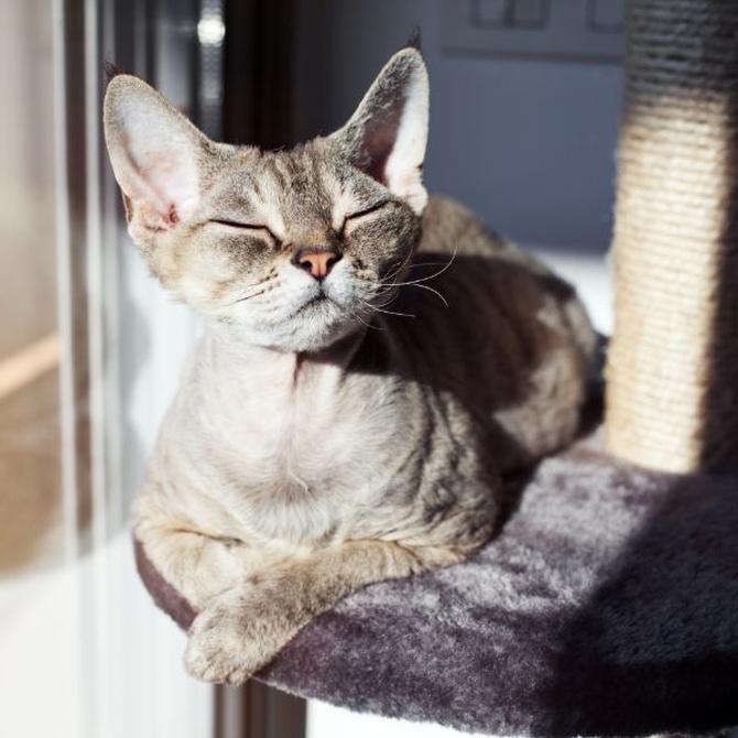 Cuidados que necesitan nuestros gatos en verano