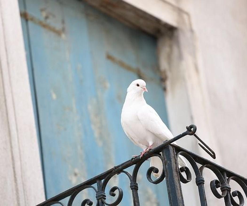 Consecuencias del excremento de palomas en el entorno humano