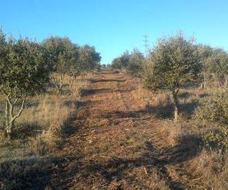 Talas: Productos y servicios de Servicios Forestales FsV