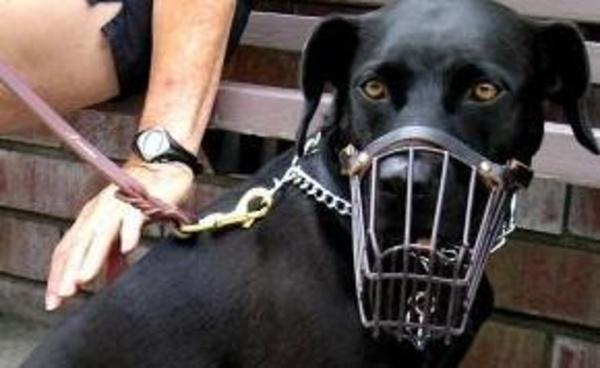 Animales peligrosos: Catálogo de Psicotécnico El Doncel