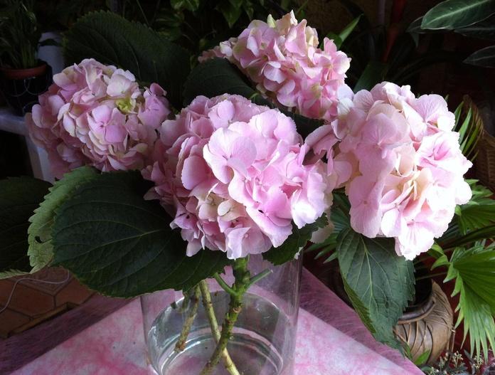 Hortensias en jarrón de cristal