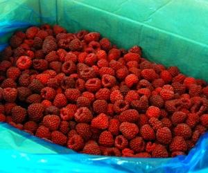 Frutas Congeladas