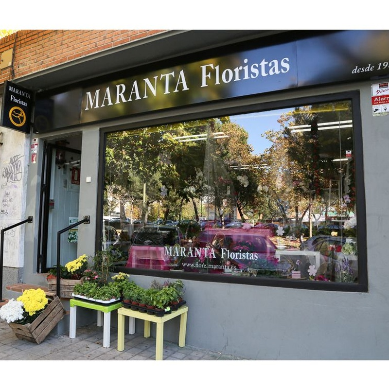 Visita nuestra tienda de manera Virtual: Catálogo de Flores Maranta