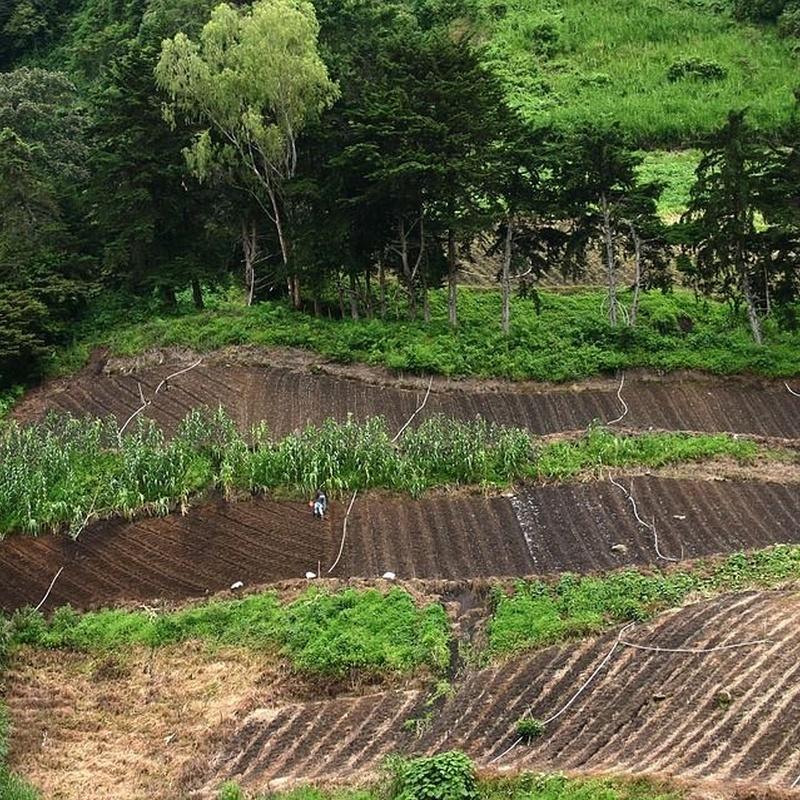 Tierra vegetal: Productos y servicios de ARIDOS ENVASADOS PRONAJI