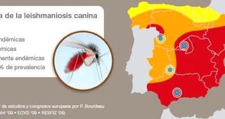CAMPAÑA DE PREVENCIÓN DE LA LEISHMANIOSIS CANINA