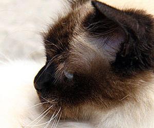 Clínica veterinaria en Boadilla del Monte