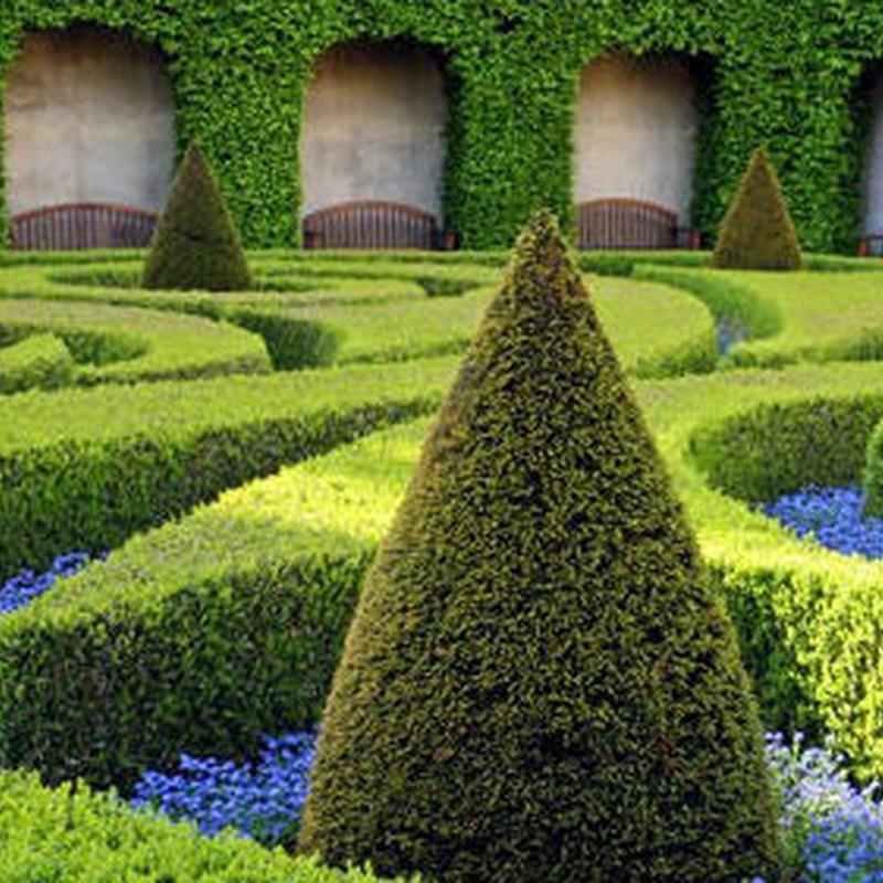 Mantenimiento integral de jardines: Servicios de Jarmant Versalles