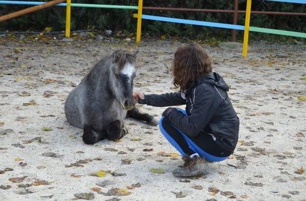Especial caballos y ponis: Servicios de Club Hípico de Cenes