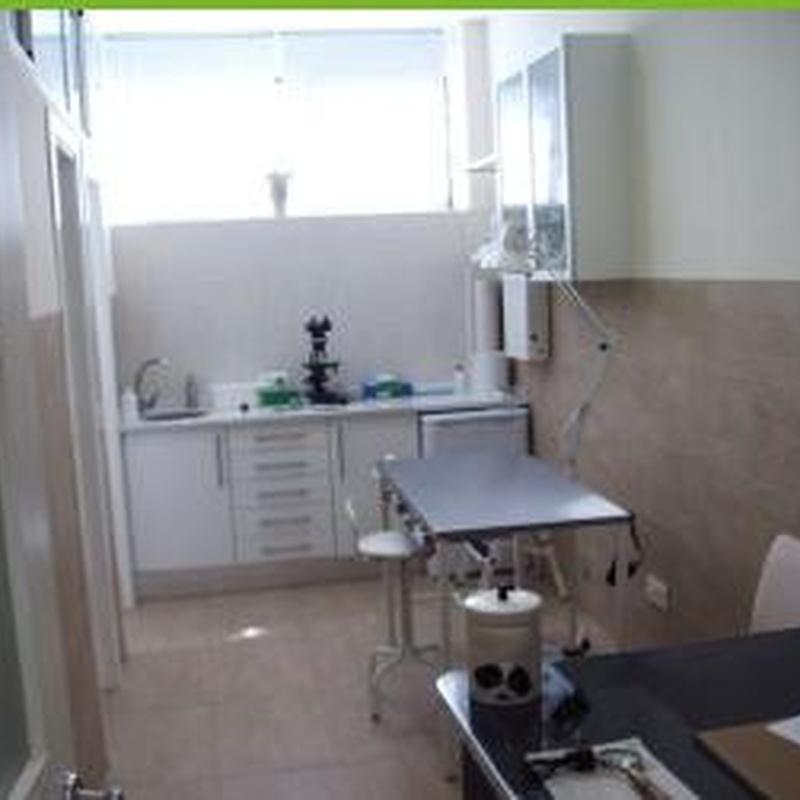 Vacunaciones: Servicios de Centro Veterinario La Tortuga