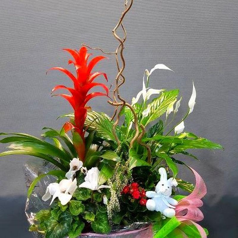 centros nacimientos : Productos de Flores Madrid