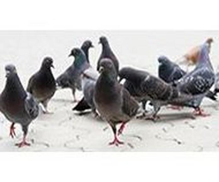 Control de aves : Nuestros servicios de SBA Control de Plagas