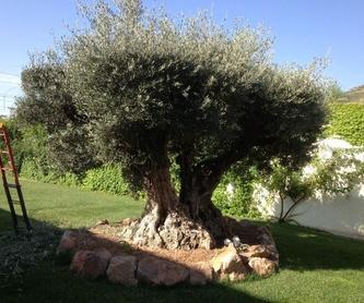 Talas de árboles: Servicios de Ruepra