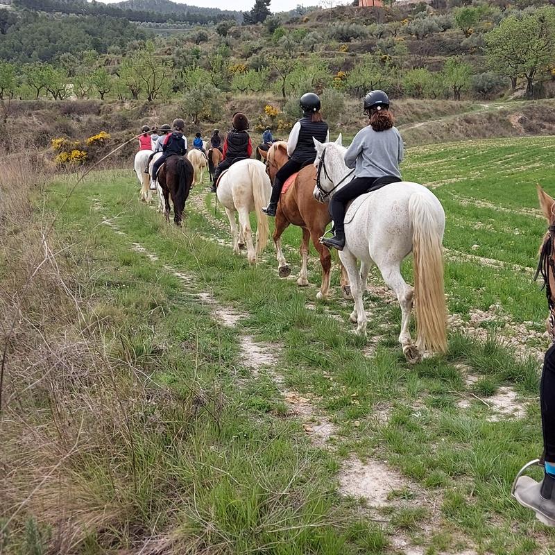 Cursos de verano 2021: Servicios de Equitación Peluca