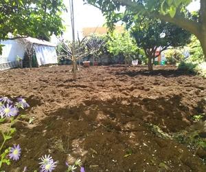 Mantenimiento de jardines en Tenerife