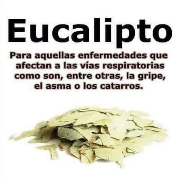 Propiedades del eucalipto.