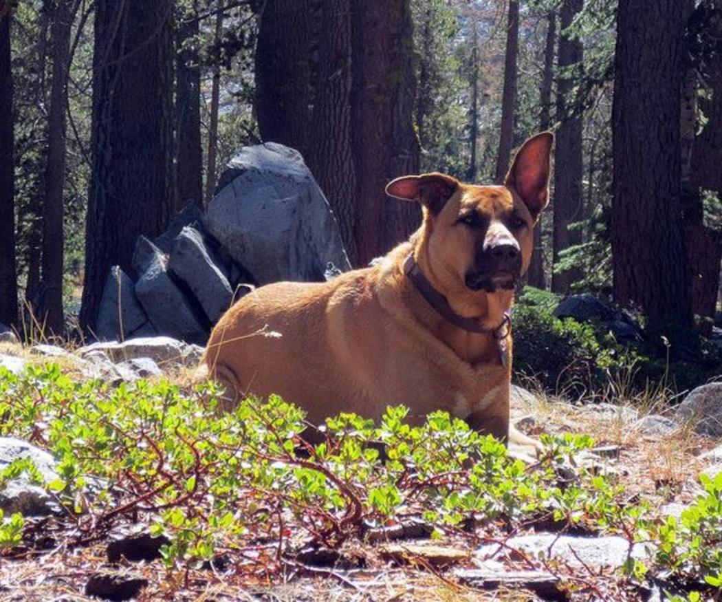 ¿Cuáles son los problemas oculares más frecuentes en perros?