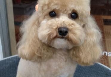 Estilismo y peluquería canina