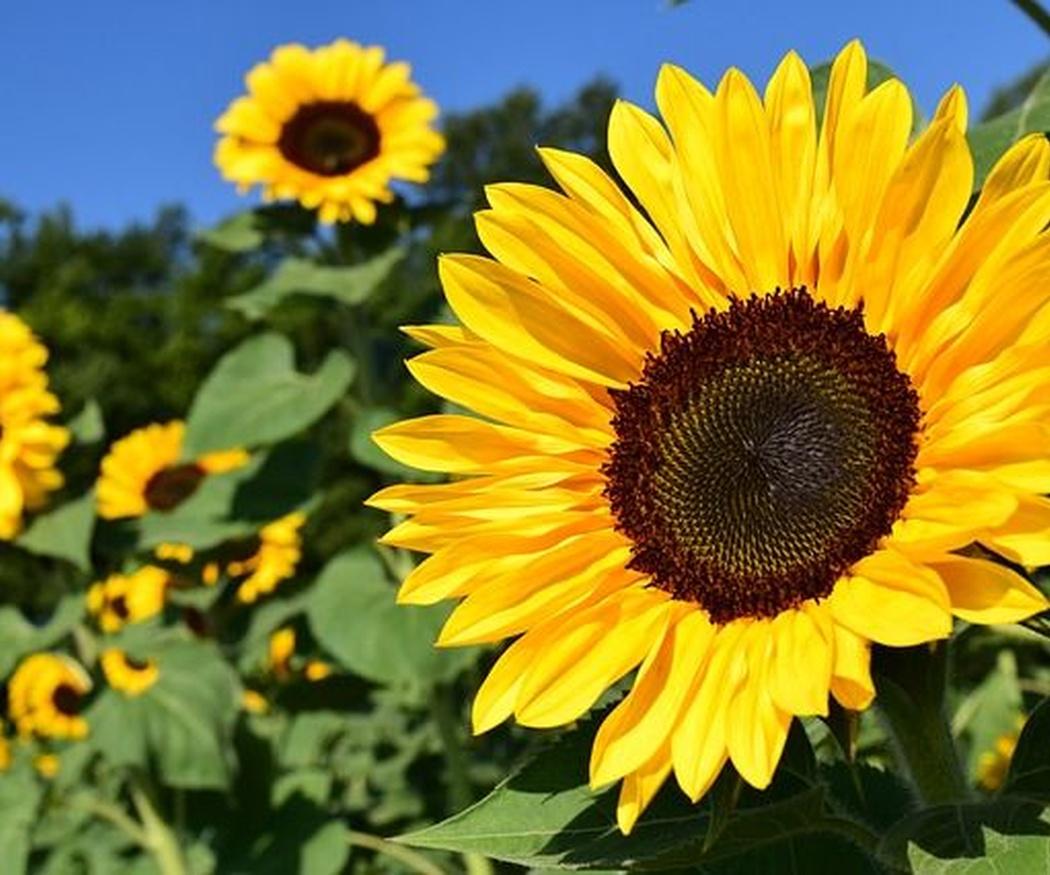 Las flores más destacadas en otoño
