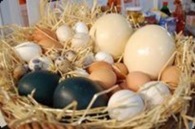 Ovoproductos: Huevos Cañavate