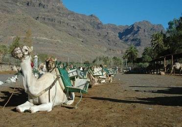 Camel Safari Park
