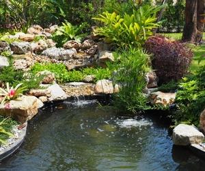 Conoce los beneficios que flotan en el agua de tu estanque