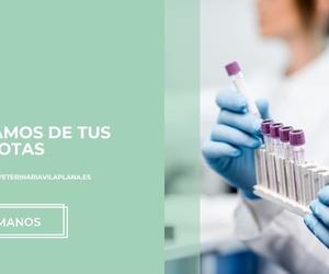 Clínica veterinaria en Sant Feliu de Llobregat