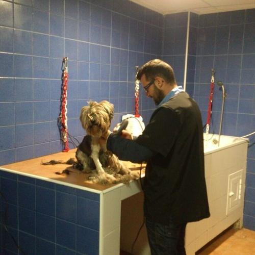 Peluquería canina Albacete