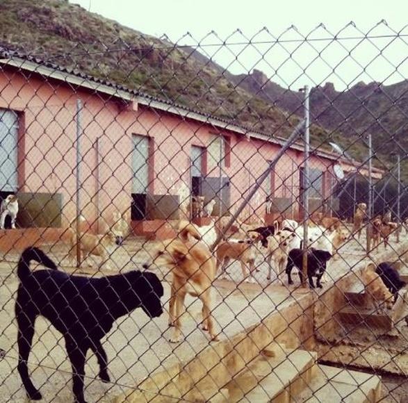 Colaboración con protectoras: Servicios de Clínica Veterinaria y Residencia Zoopark