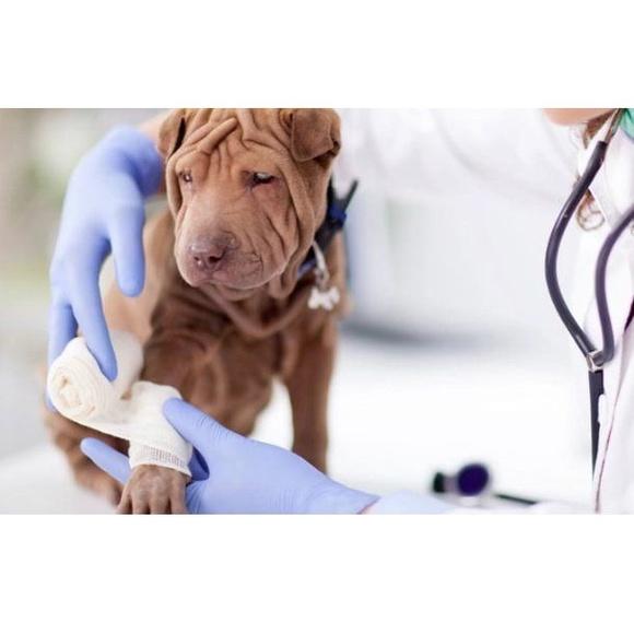 Servicio de urgencias: Servicios de Clínica Veterinaria Servet