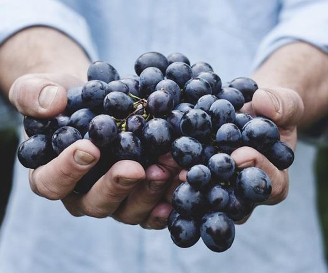 Descubre los beneficios de la vinoterapia