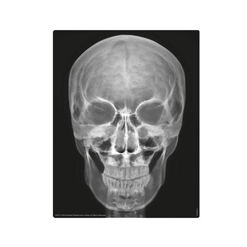 Esqueleto humano. 4M